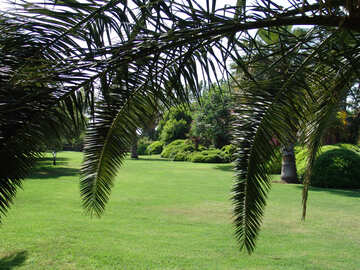 Lawn under the palm trees №192