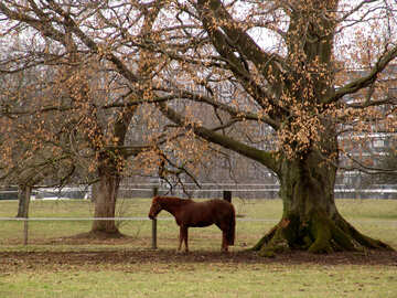 The horse stood in the shade of tree with fallen leaves №371