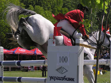Rider on white horse jumped over the obstacle rear view №301