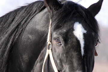 Horses` heads close №463