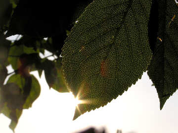 The sun on the edge of the leaf №216