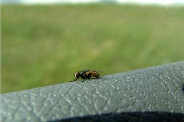 Fly. Macro №672