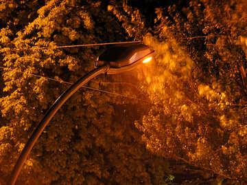 Luce notturna sotto la pioggia contro uno sfondo di alberi №210