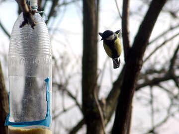 The titmouse flies up to feeding trough №878