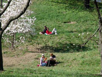 People resting in the meadow under the blossoming magnolias №563