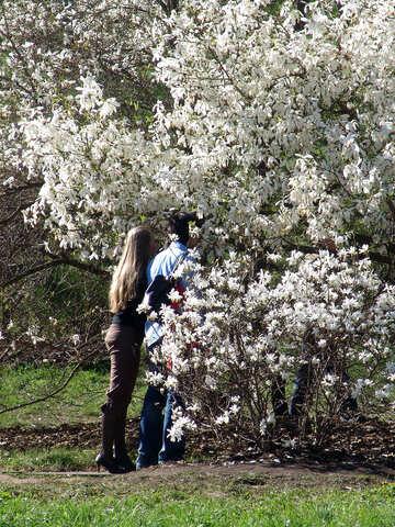 Spring. Magnolias. Love. №562