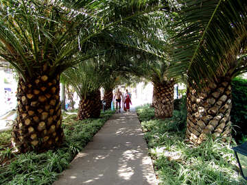 Path under palm trees  №190