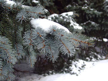 Blue tree branch in the snow №410