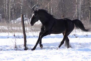 Gallop in the snow №467