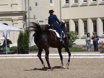 Dressage competitions. Turning on the gallop №750
