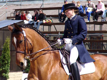 Horsewoman at bay stallion. Dressage №751