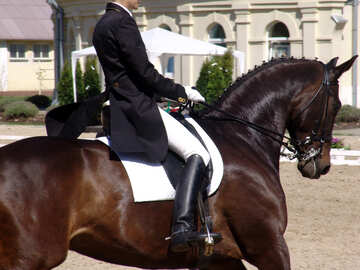 Horsewoman on black horse in competition №764