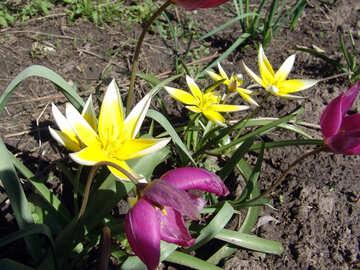 Spring Flowers №528
