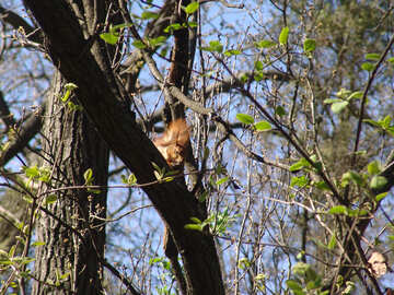 Squirrel at the spring branch №590