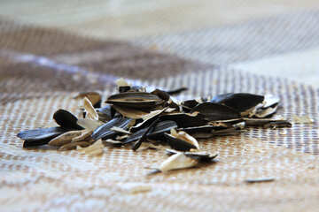 Hulls of sunflower seeds on the table №856