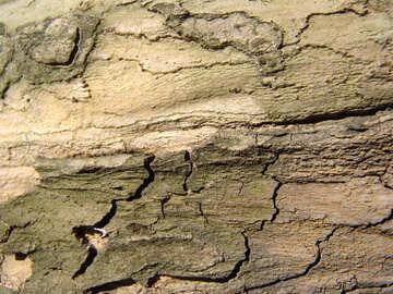 The bark of the tree. Macro №567