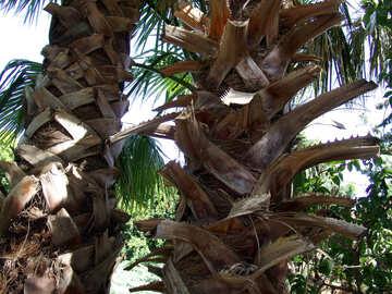 Palm tree trunk  №188