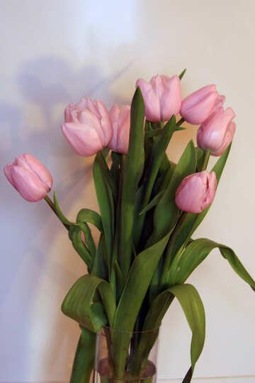 Tulipani Mazzo №951