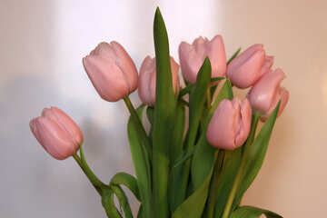 Bouquet of pink tulips №946