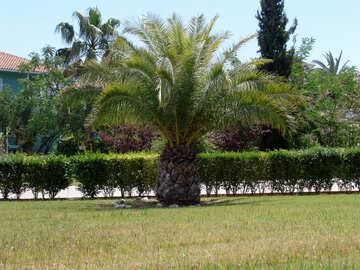 Palm tree №258