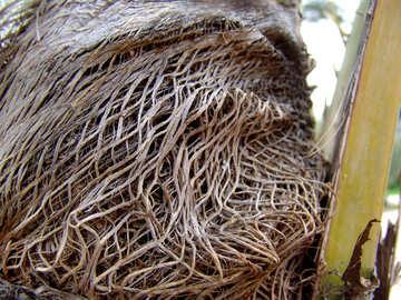Palm trunk №268