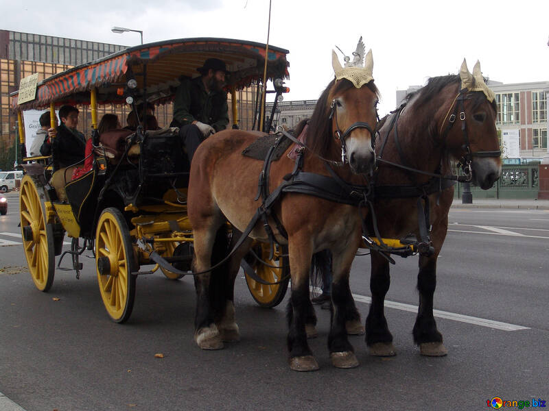 Pferd Reiten durch Berlin №237
