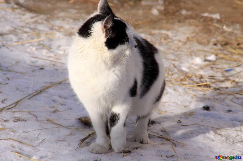En noir et chat blanc se fige dans la neige №705