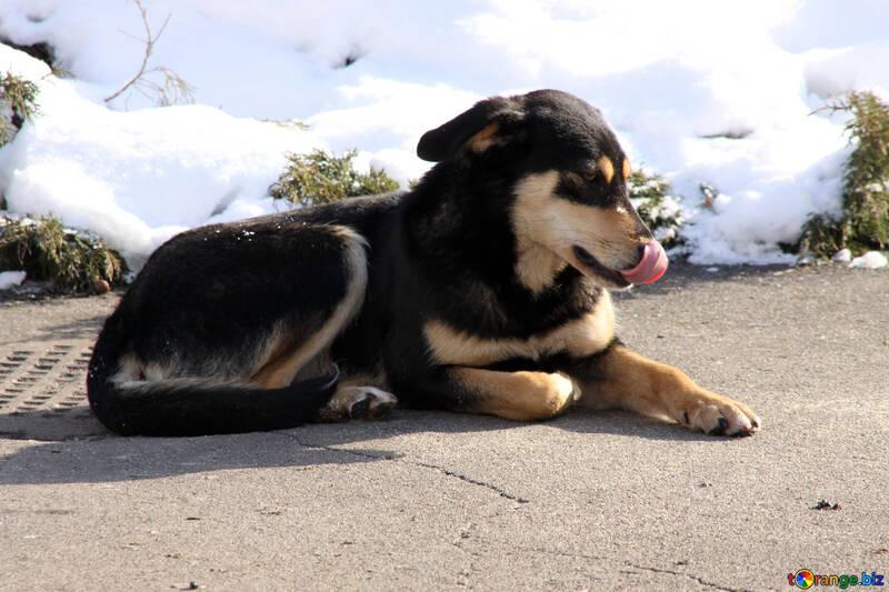 Stray  dog №711