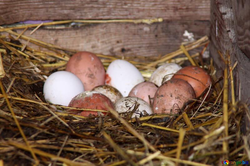 Fresh chicken eggs in the henhouse №773