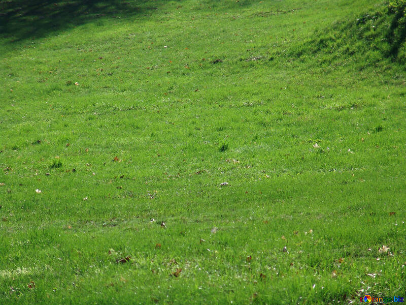 Green lawn №558