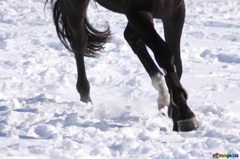 Des jambes du cheval au galop №476