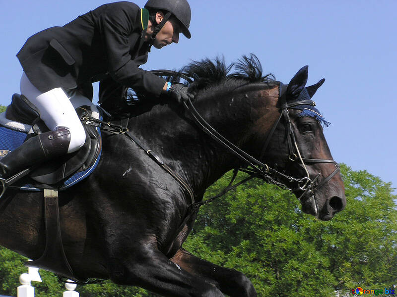 Rider on horse jumps an obstacle against the tree №300
