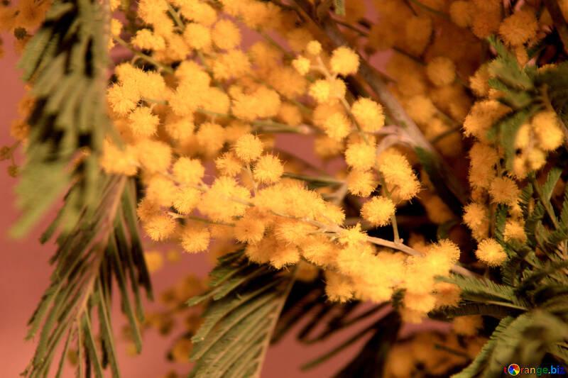 Flores plata zarzo №961