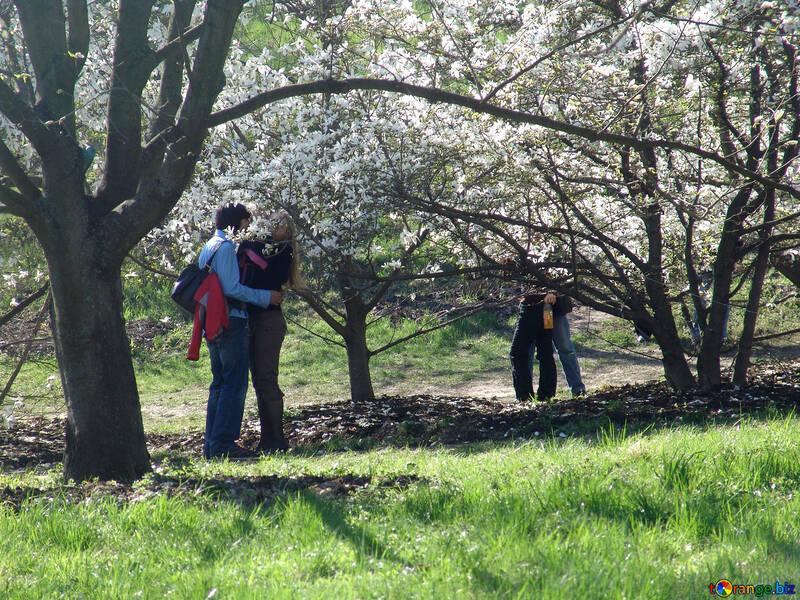 Amore coppie sotto sbocciare albero di magnolia №565