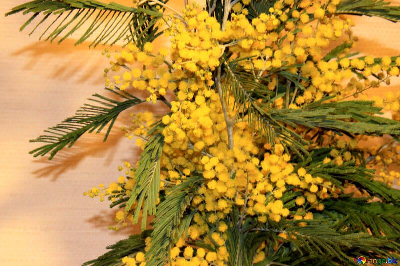 Sprig mimosa №957