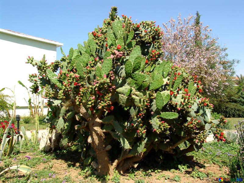 Large flowering cactus №254