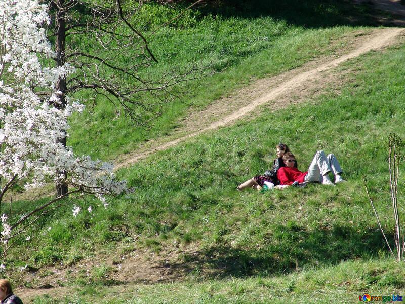 Él y ella admirado tsvvetuschimi magnolilyami №564