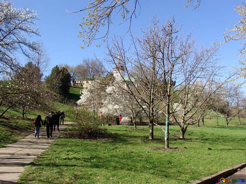 Весна в ботаническом саду. Магнолии №560