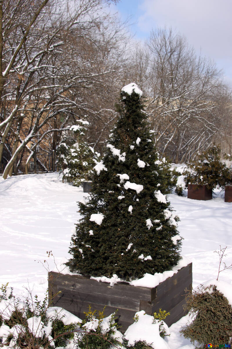A Christmas tree in wooden box on the street in the snow №828