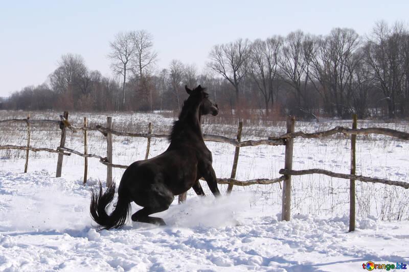 Black stallion brakes front fence №475