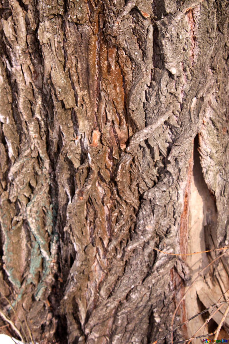 Deep bark texture №850