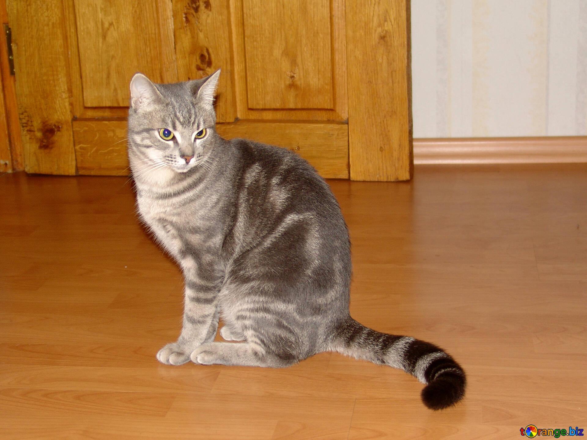 Обои smoky, дымчатый, кот, cat. Кошки foto 11