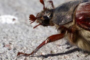 May-bug. Large parts №1714