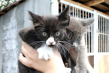 Два котенка в руках №1053