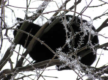 The black cat sitting on the ice-covered tree №1010