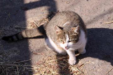 Wildcat №1261