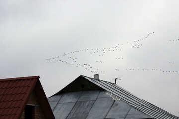 Cuneo dell`uccello sopra i tetti №1177