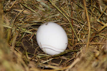 White egg in the nest №1238