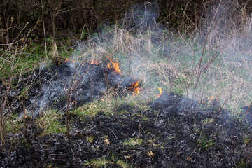 Burning dry grass №1722