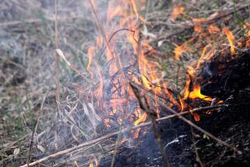 Burning grass №1727